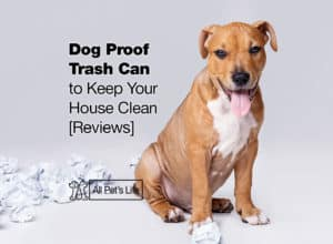 Read more about the article 11 Best Dog Proof Trash Can Reviews [2021] to Keep Your House Clean
