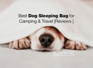 Read more about the article 10 Best Dog Sleeping Bag Reviews Camping / Travel [2021]