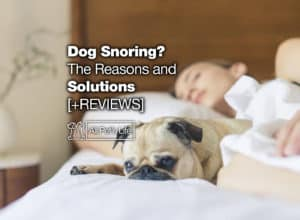 Read more about the article Dog Snoring? The Reasons and 11 Solutions [2021 REVIEWS]