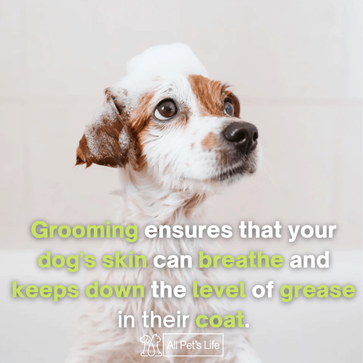 Dog Clippers for Grooming taking a bath