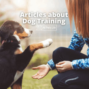 dog being trained by a girl