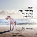 Best Dog Training Techniques You Should Know and FAQs [2021]