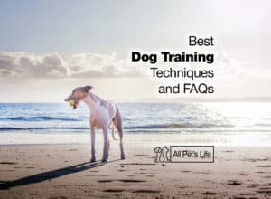 Read more about the article Best Dog Training Techniques You Should Know and FAQs [2021]