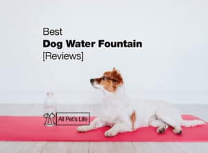 Read more about the article 10 Best Dog Water Fountain Reviews [2021]