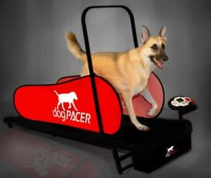 big dog on dogpacer 91641 lf 3 1 full size dog pacer treadmill black and red