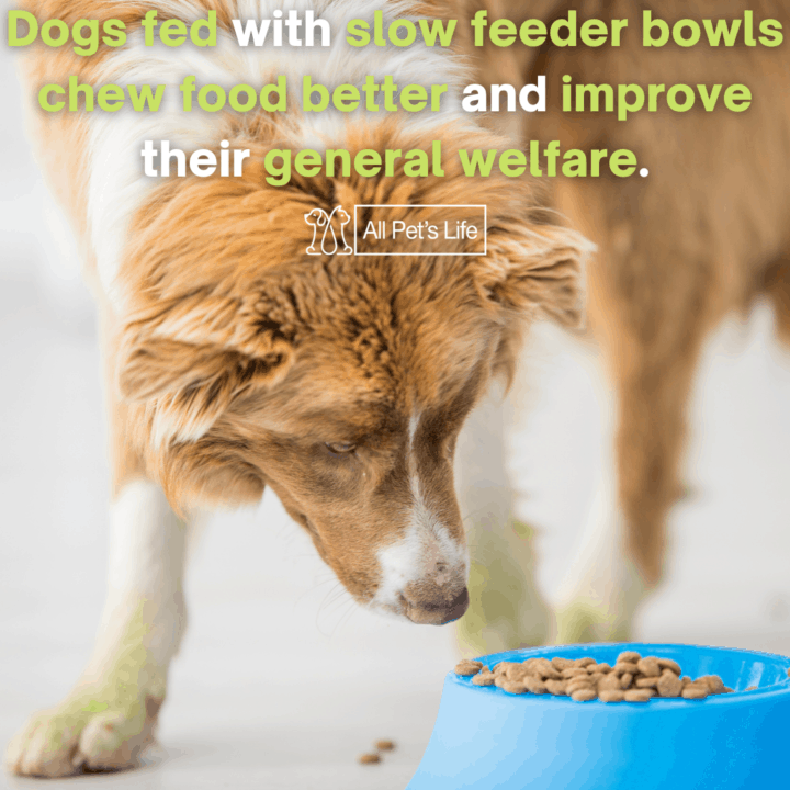 dogs fed with slow feeder bowls
