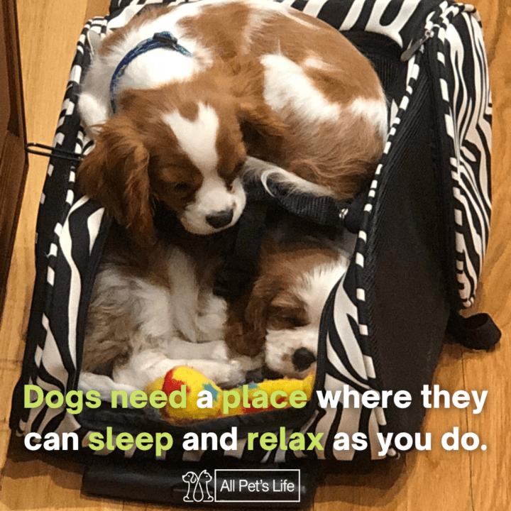 dog sleep on a dog bed