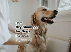 Read more about the article 12 Best Dry Shampoo for Dogs or DIY [2021 Reviews]