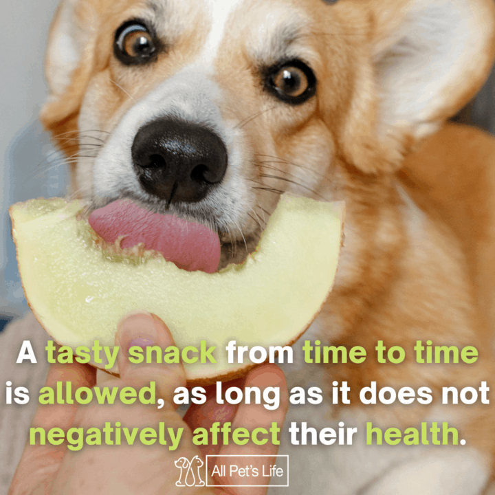 Can dogs eat watermelon, melon
