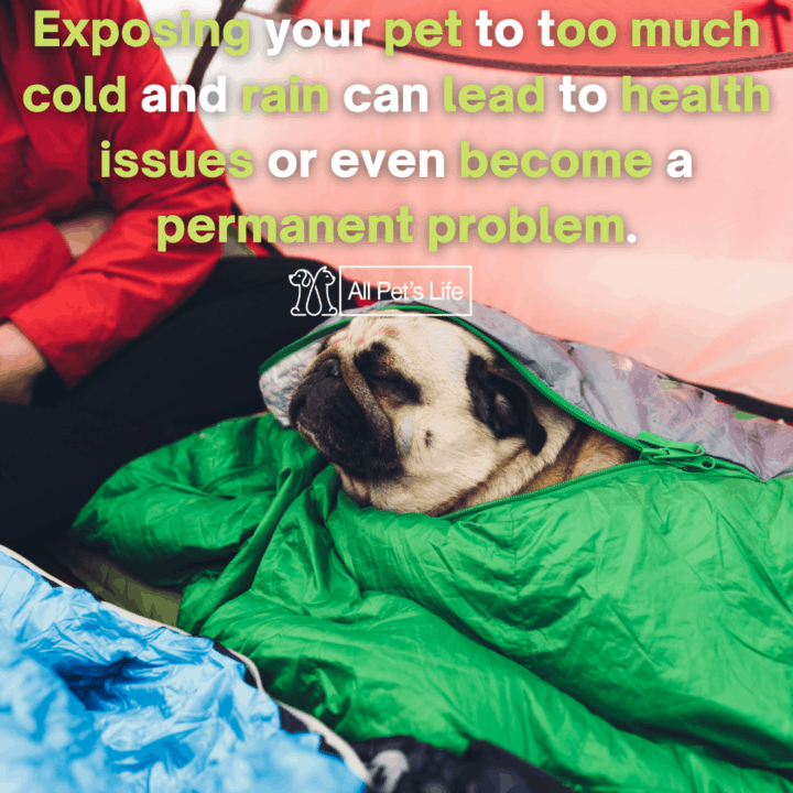 dog in inside a tent with a dog sleeping bag