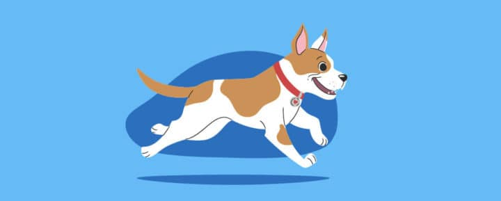 factors that influence a dogs lifespan