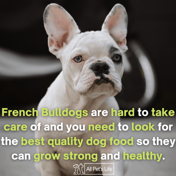 french bulldogs seating on the ground