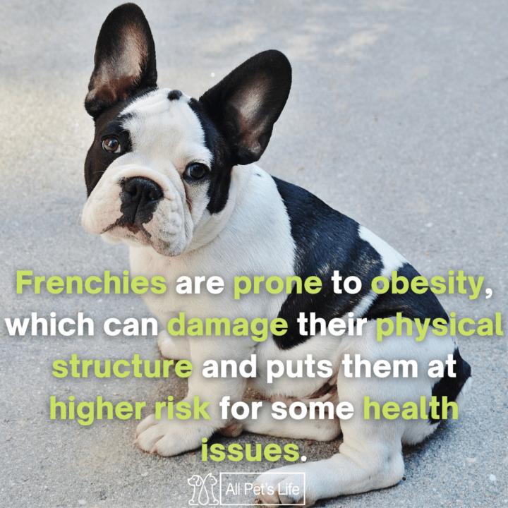 French Bulldog sitting