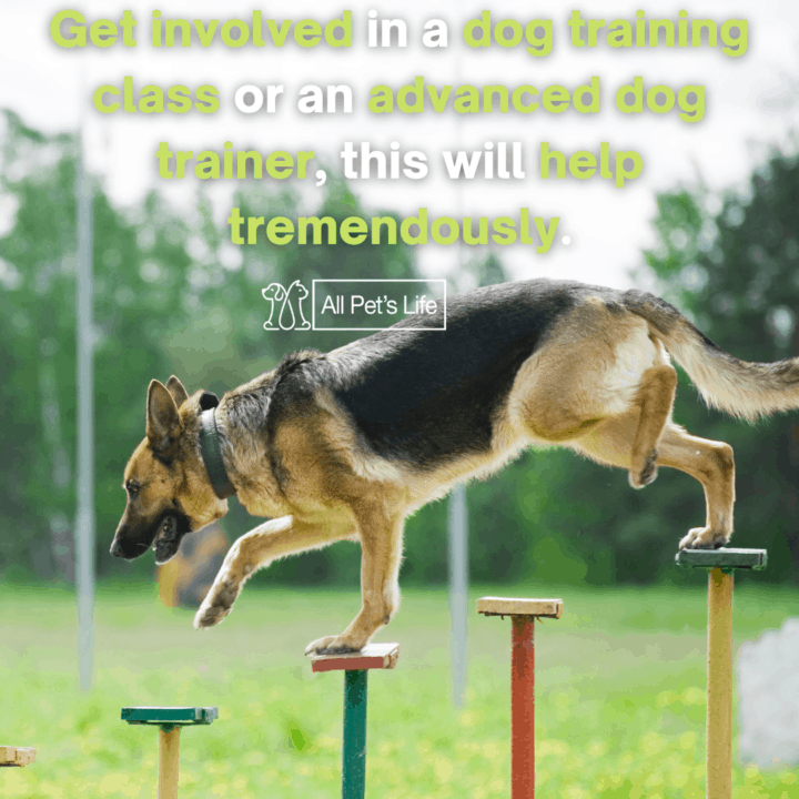 dog doing obstacle training