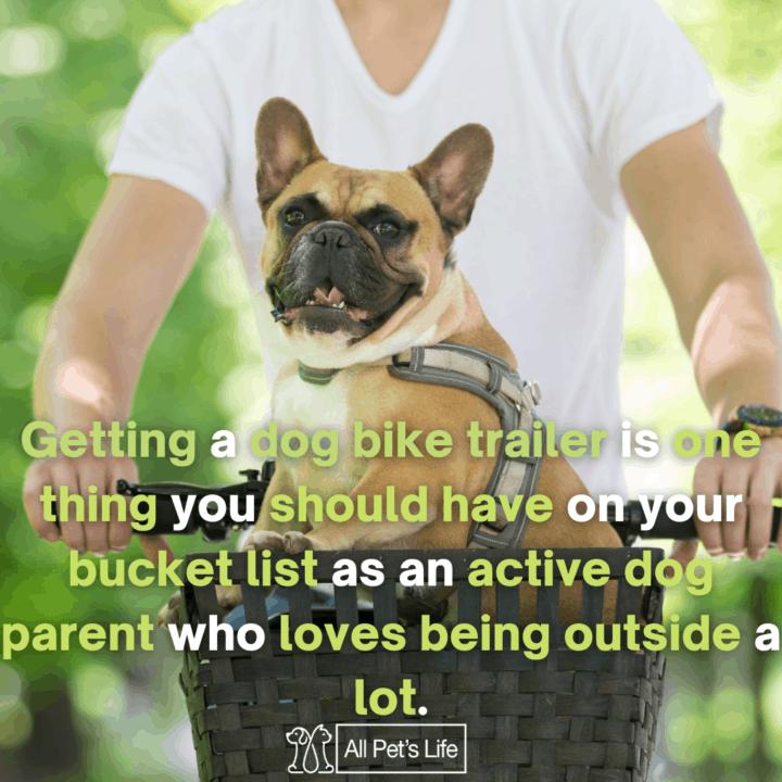 dog riding a bike trailer