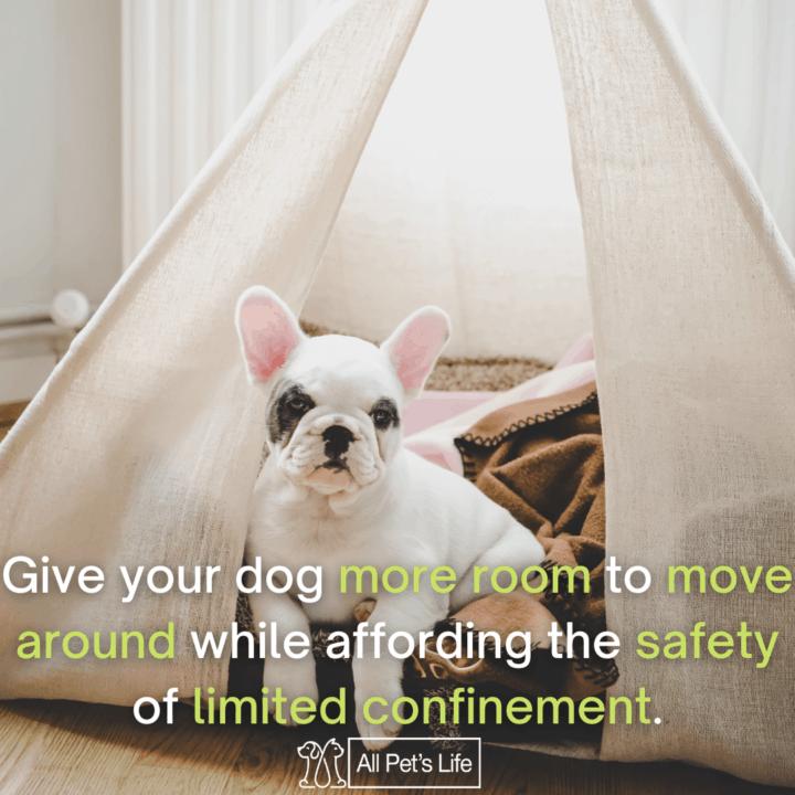 dog sitting inside the dog tent