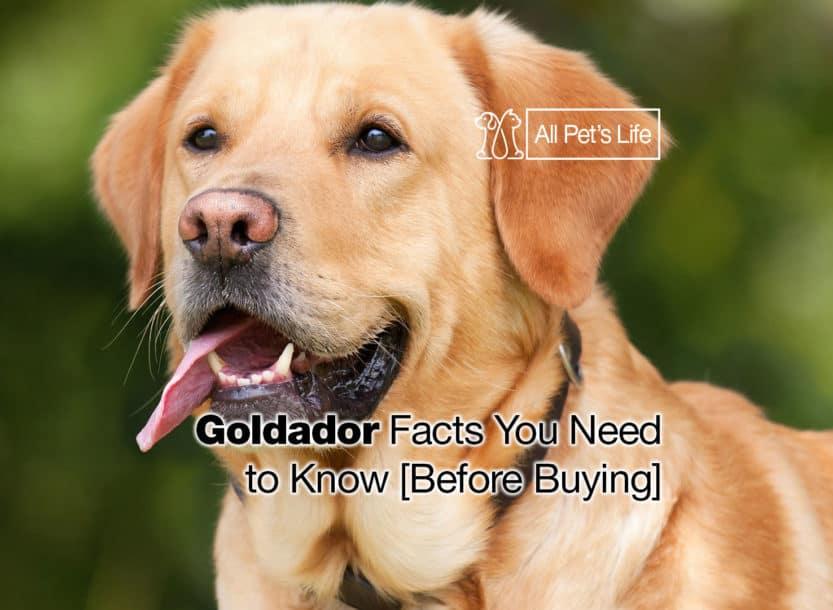 goldador