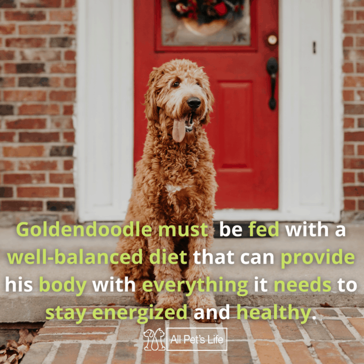 goldendoodle sitting outside the house