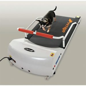 dog on a gopet petrun pr700 treadmill for small dogs