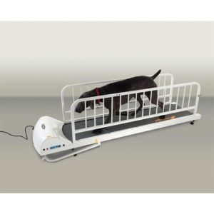 dog on a gopet petrun pr725 encloseable treadmill for large dogs