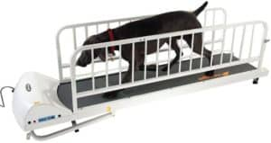 dog on a gopet treadmills for dogs like the pr725 provide excellent exercise for large dogs