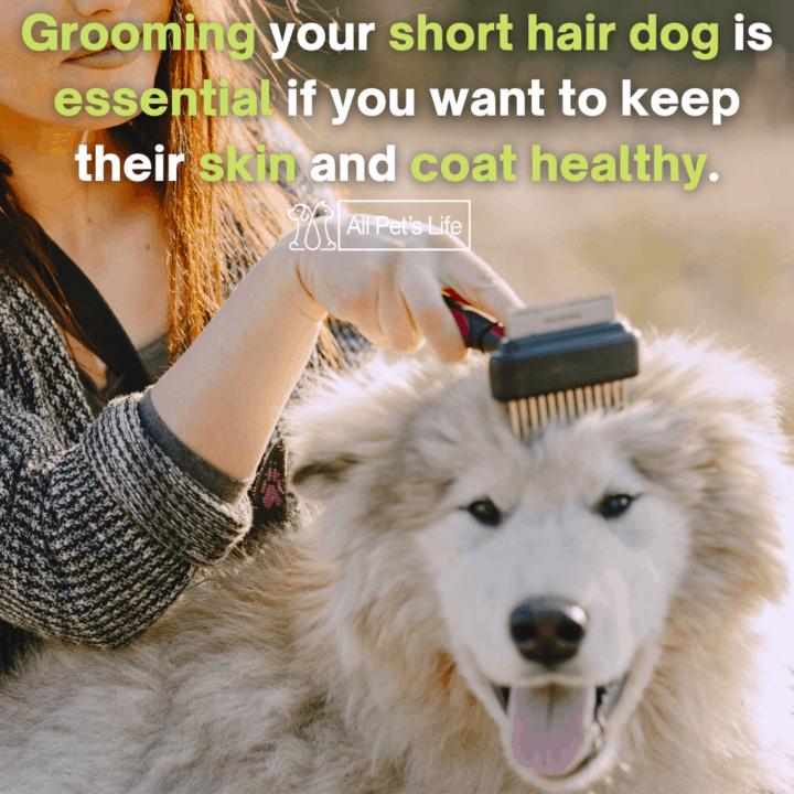 dog being brushed using a dog bursh