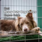 12 Heavy Duty Dog Crate Reviews + Buyers Guide [2021]