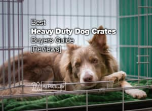 Read more about the article 12 Heavy Duty Dog Crate Reviews + Buyers Guide [2021]