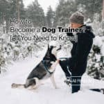 How to Become a Dog Trainer? [All You Need to Know 2021]