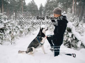 Read more about the article How to Become a Dog Trainer? [All You Need to Know 2021]