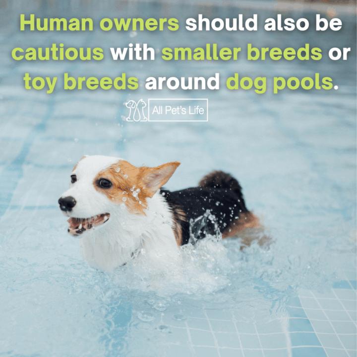 dog walking on the pool