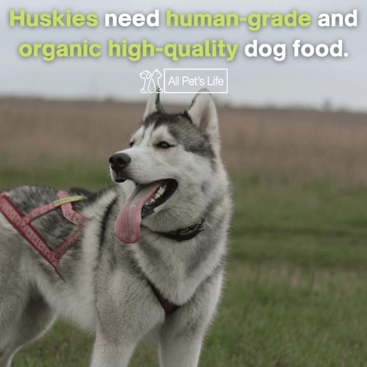 huskies need human grade and organic high quality dog food