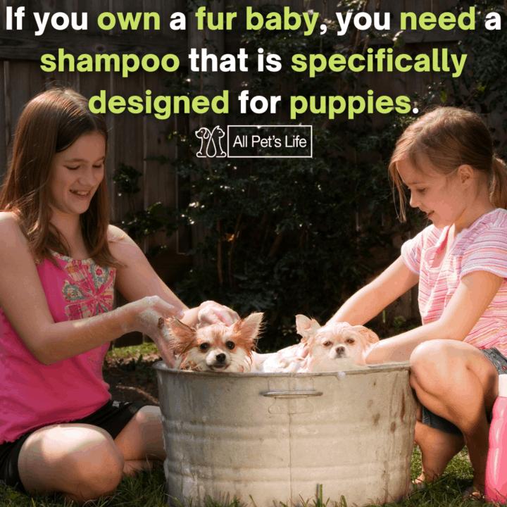 children bathing two puppies