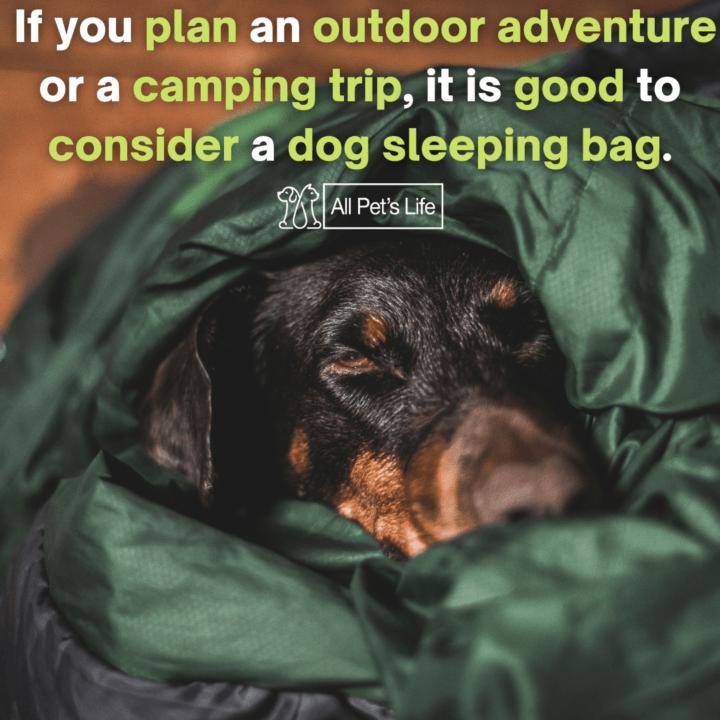 dog sleeping in a dog sleeping bag