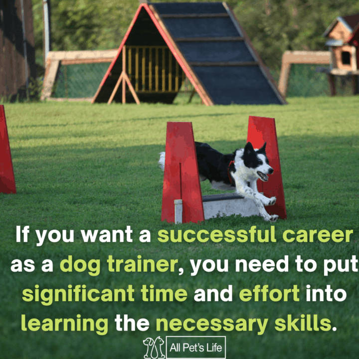 dog training in obstacle course