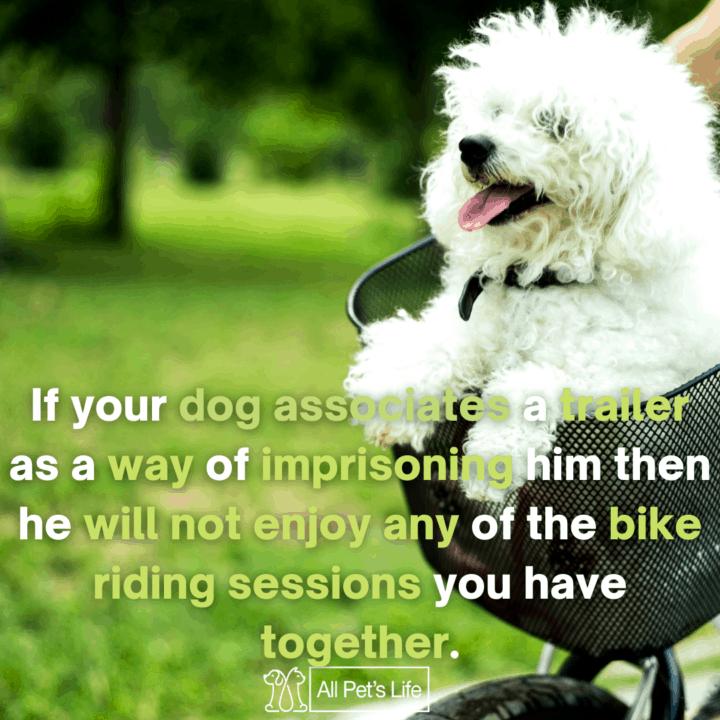 poodle riding a bike trailer