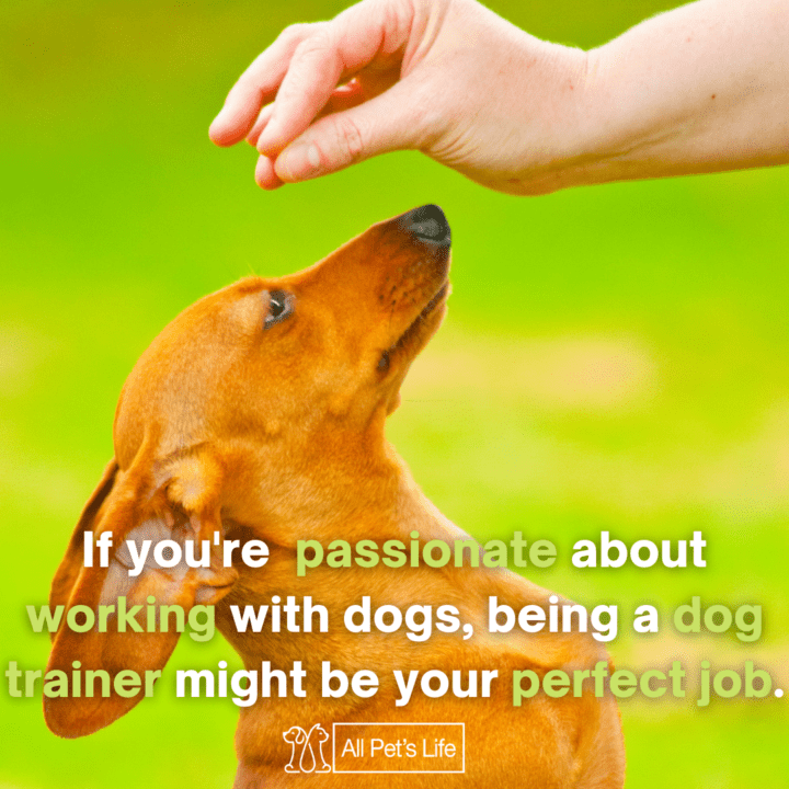 person training a dog