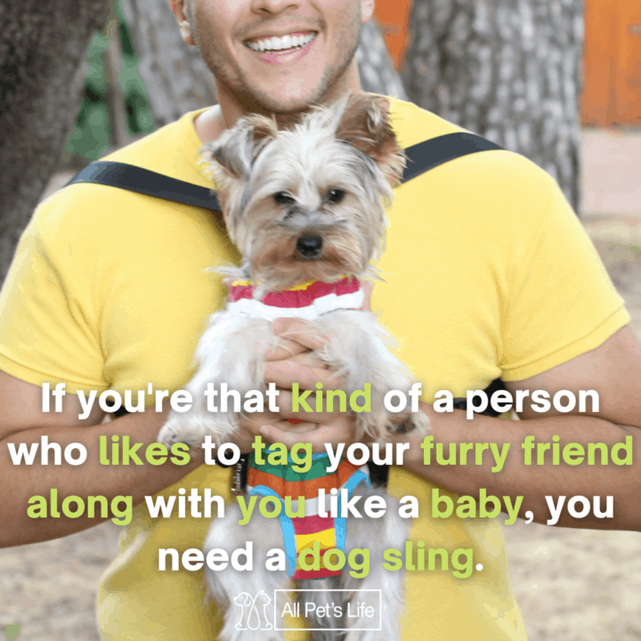 man carrying a dog in a dog sling carrier