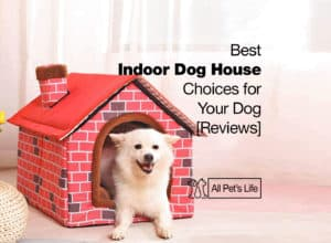 Read more about the article 12 Best Indoor Dog House Choices for Your Dog [2021 Reviews]