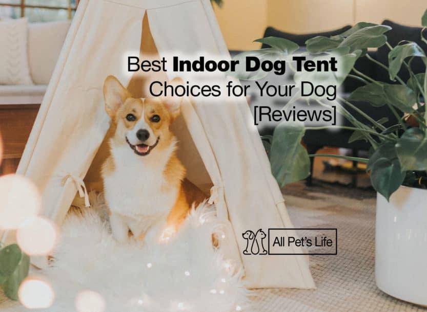 indoor dog tent