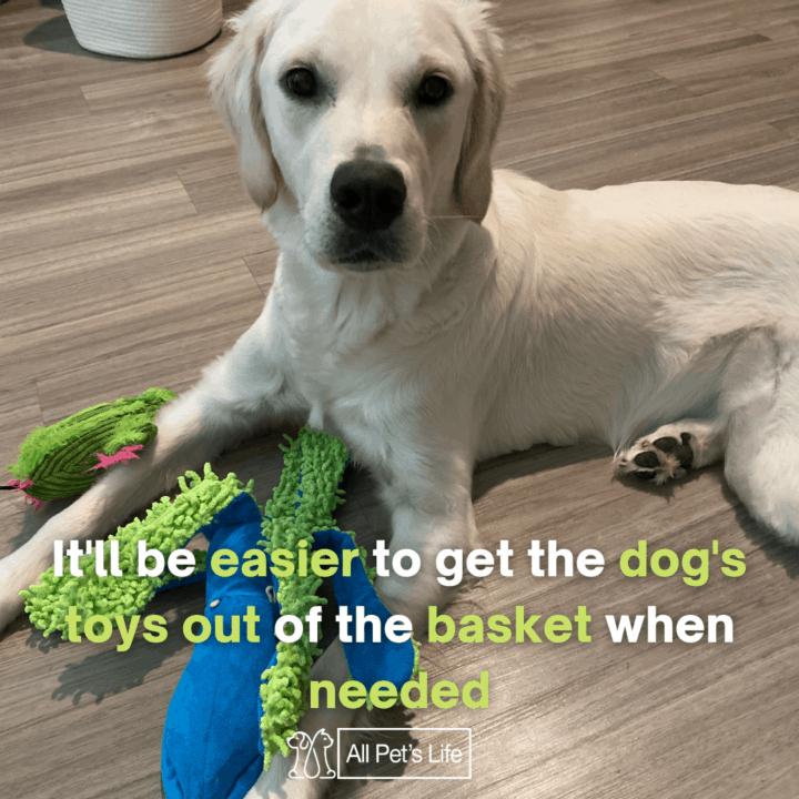 dog playing a toy dog