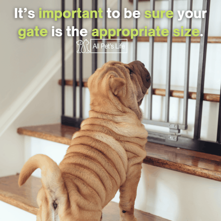 Retractable Dog Gate on the stairs
