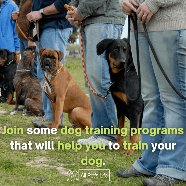dogs lined up for training