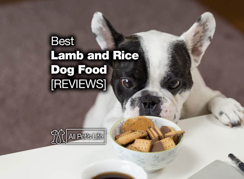 lamb and rice dog food