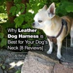 8 Best Leather Dog Harness for Your Dog's Neck [Reviews]