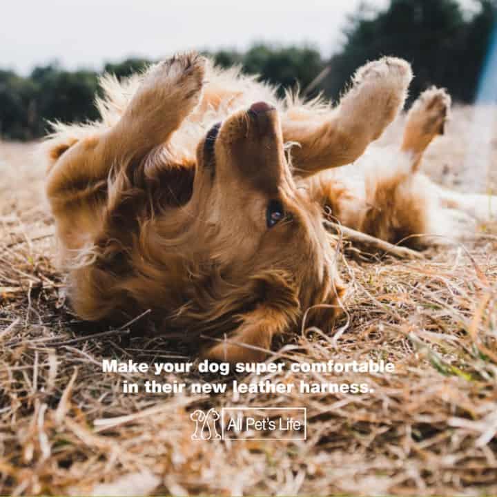 leather dog harness comfort