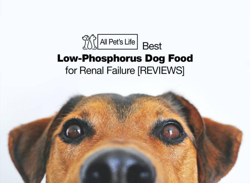 low phosphorus dog food