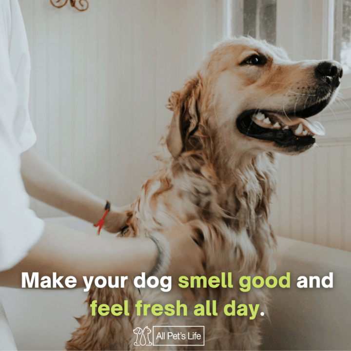 dog being bathed by a human