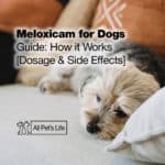 Meloxicam for Dogs Guide: How it Works [Dosage & Side Effects]