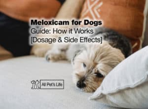 Read more about the article Meloxicam for Dogs Guide: How it Works [Dosage & Side Effects]